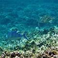 鳩間島の海 3