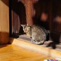 新宿永福寺の猫