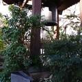 Photos: 源覚寺汎太平洋の鐘