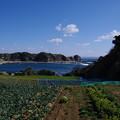 写真: 江奈湾