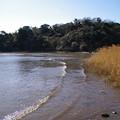 写真: 江奈湾の干潟