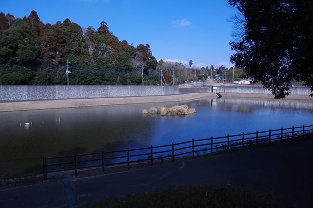 公津の杜の調整池