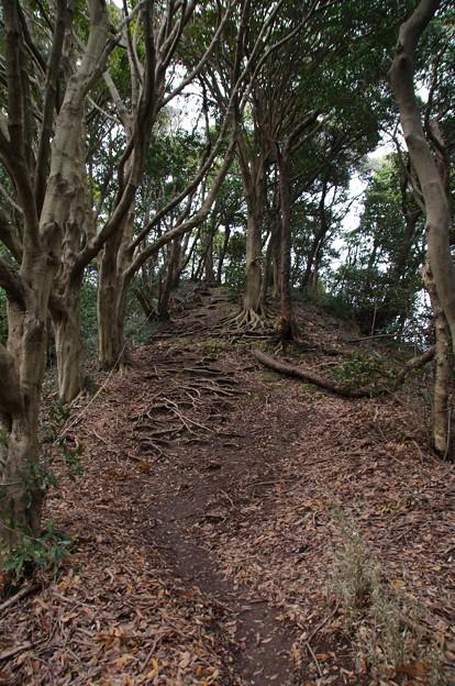 三浦富士の小ピーク