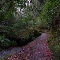 写真: 椿の道