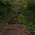 写真: 苔の道
