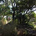 写真: 神武寺山頂上(標高134m)