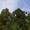 写真: 杉