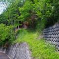 写真: 尾根の登山道