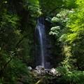 Photos: 白雲の滝