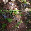写真: 関八州見晴台のカエル