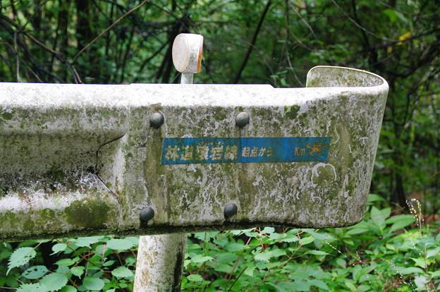 林道猿岩線