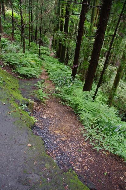 写真: 黒山三滝への道