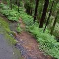 Photos: 黒山三滝への道