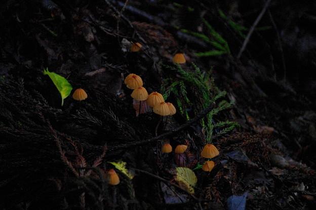 菌類の何か