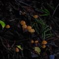 Photos: 菌類の何か