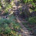 虎ヶ岡城跡の堀切