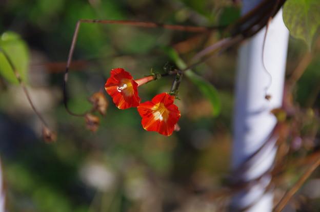 円良田での小さな花