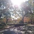 昭和記念公園にて