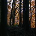 大塚山の黄葉