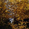 みたけ山の黄葉