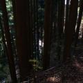 Photos: みたけ山の登山道