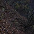 御岳山から大楢峠への道