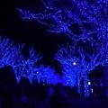 Photos: 代々木公園のイルミネーション