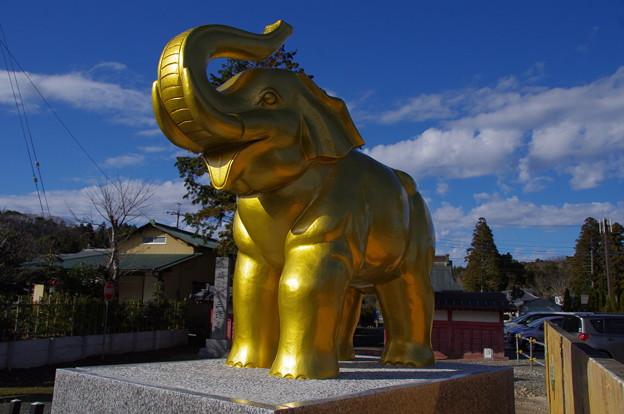 長福寿寺の吉ぞうくん