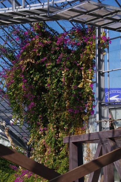 金谷ベース跡の打ち捨てられた温室の花