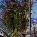 Photos: 金谷ベース跡の打ち捨てられた温室の花