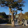 Photos: 圓福寺