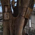Photos: 太田姫神社元宮
