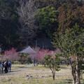 Photos: 建康寺