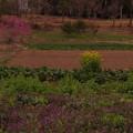 Photos: 二瀬の春