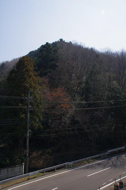 Photos: 正山