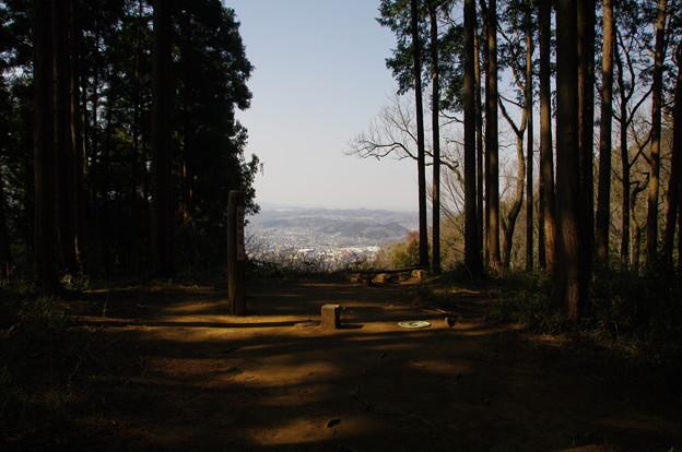 仙元山頂上(標高298.9m)