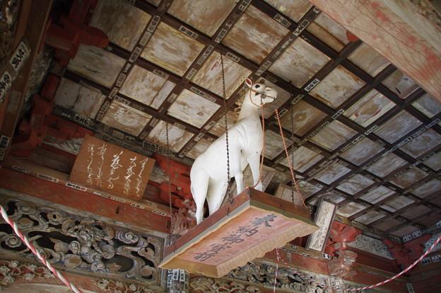 観音堂の白馬