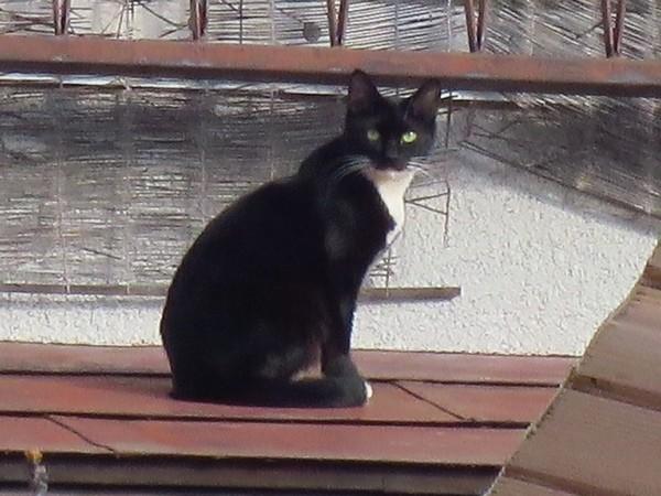 _180127 043 黒白猫