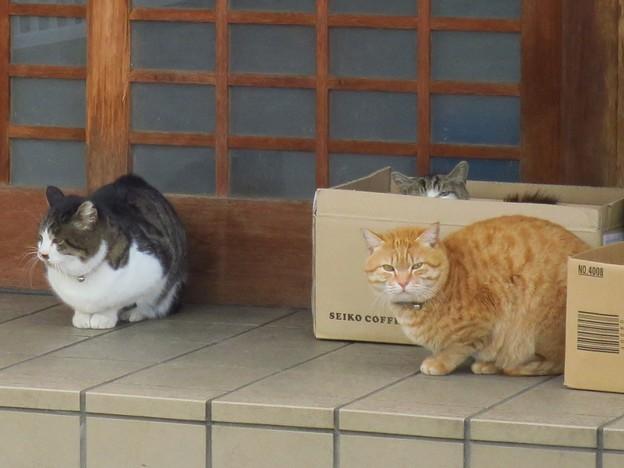 _180205 027 猫3匹
