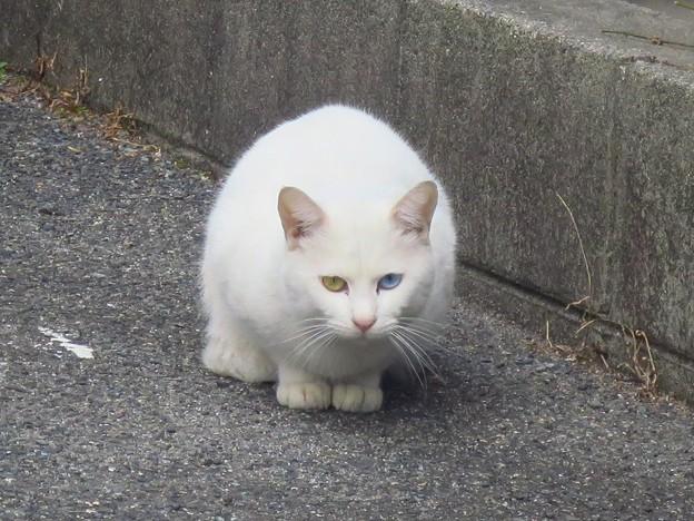 _180226 015 白猫