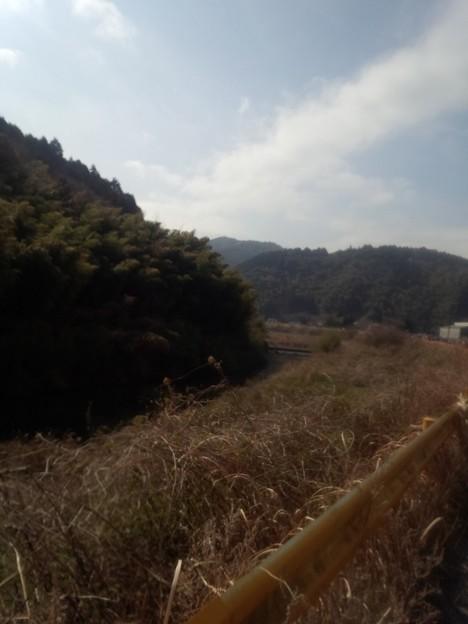 DCF00013 岩国錦帯橋マラソン