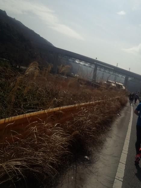 DCF00015 岩国錦帯橋マラソン