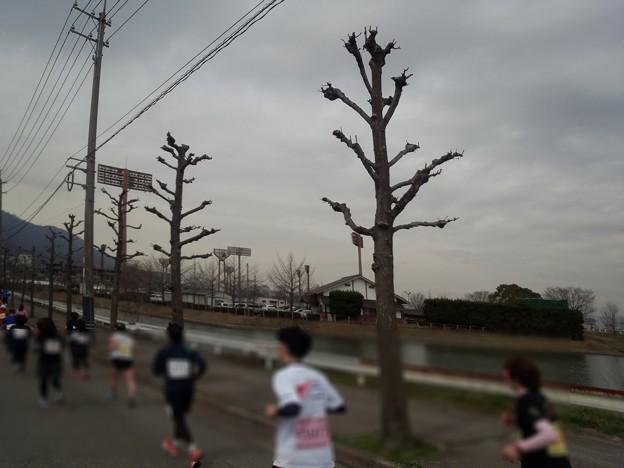 180319 025 福山マラソン