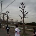 Photos: 180319 025 福山マラソン