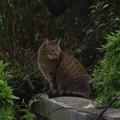 Photos: _180427 032 猫 幽玄