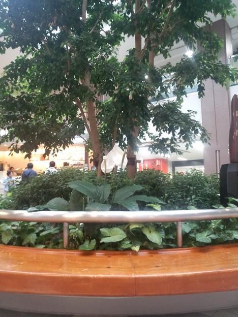 _180502 022 日赤病院ロビーの植物