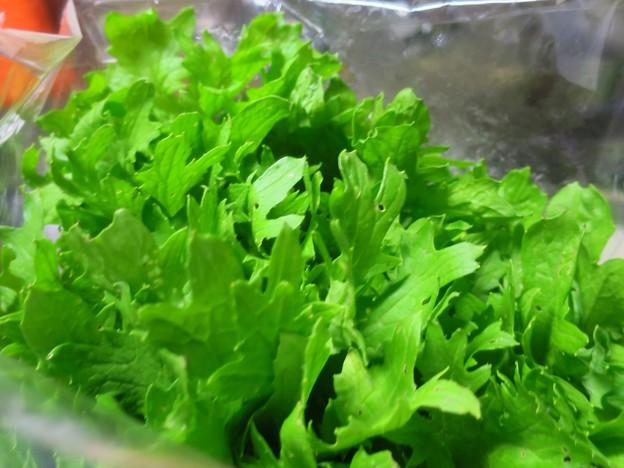_180620 458 「わさび菜」という野菜