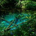 写真: 神の子池