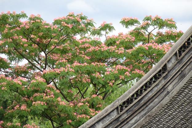 DSC09660 ねむの木 中国庭園