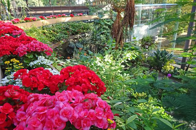 植物園内温室で